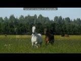 «Horse» под музыку Bryan Adams - Here I Am Музыка из мульф. про лошадей. Picrolla
