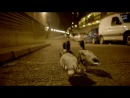 Bingo Players ft. Far East Movement - Get Up (прикольный клип про бешеных уток)
